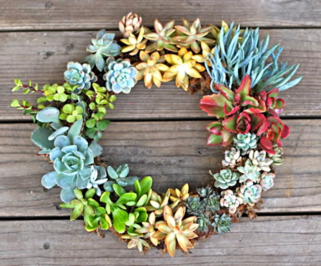 diy-gorgeous-succulent-wreath-1