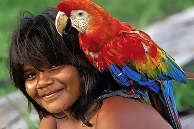 amazonia 309 arara indio cópia