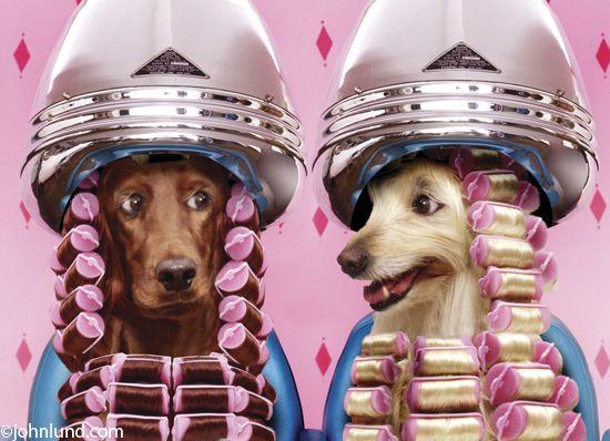 16 Cães e seus benefícios